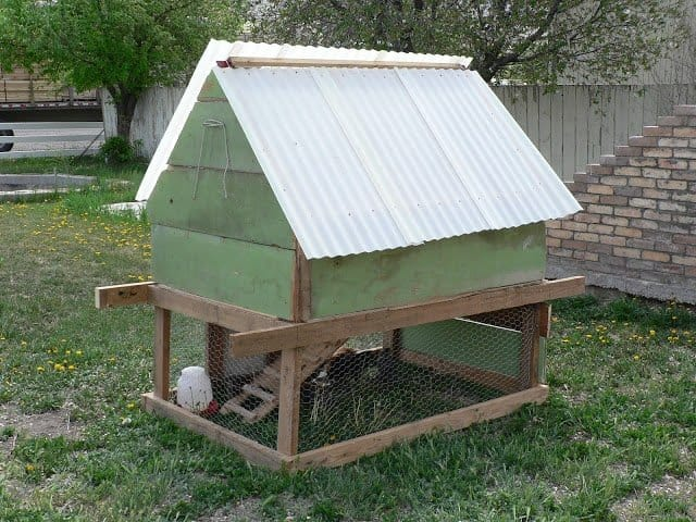 A green chicken coop with white roofing and chicken wire fencing around the bottom