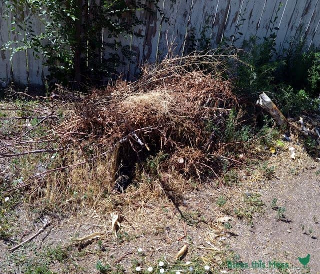 A pile of sticks in front of a wooden fence in a yard