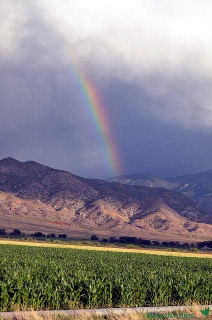 Rainbow behind mountains with green grassy field in the foreground