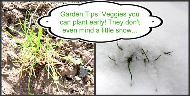 Cold Hardy Vegetable Garden