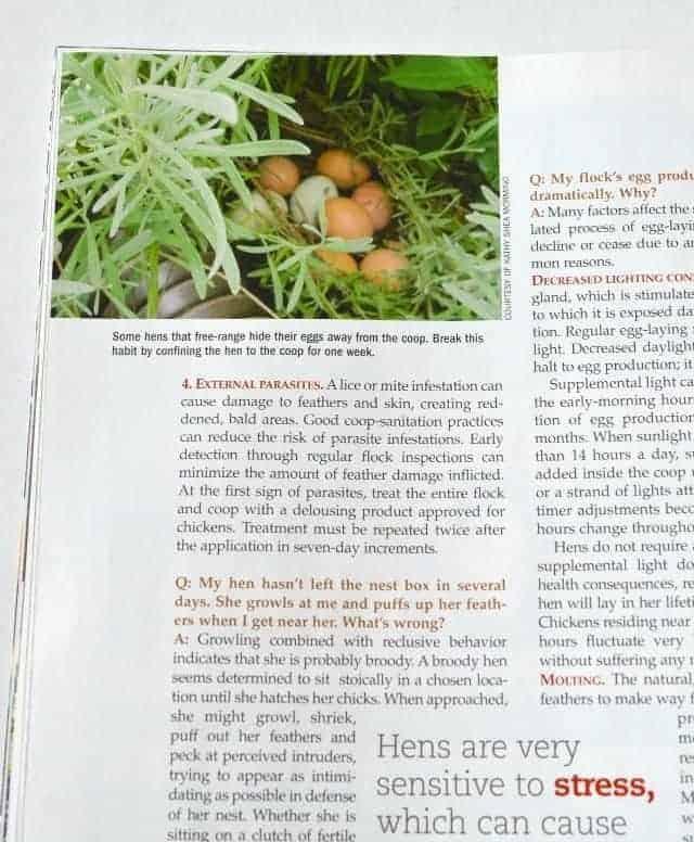 chicken magazine 3