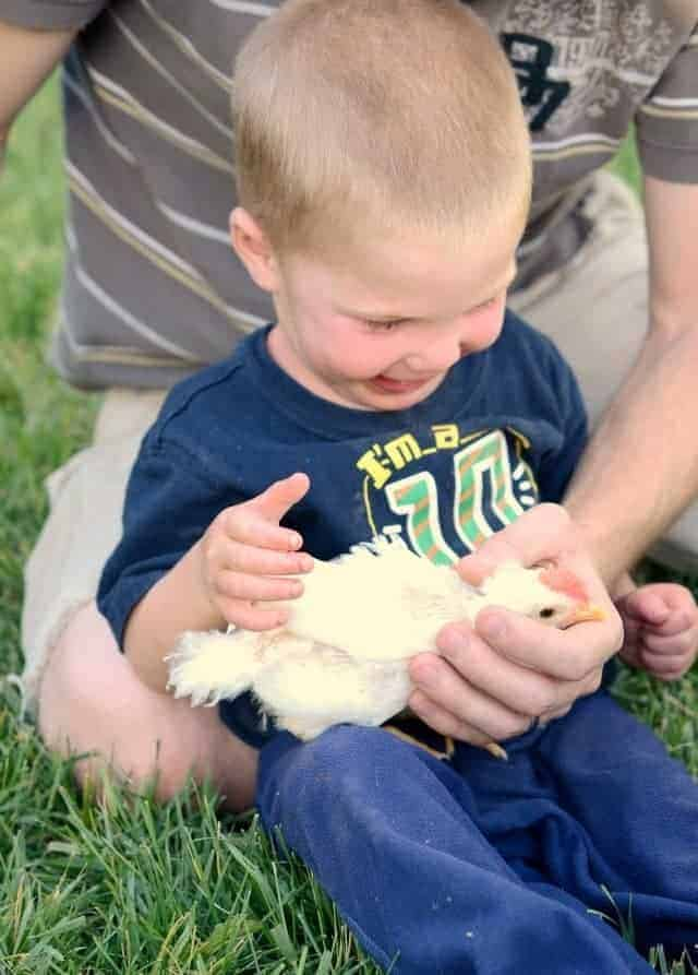 chicks playing with baby, backyard chickens, baby with chick