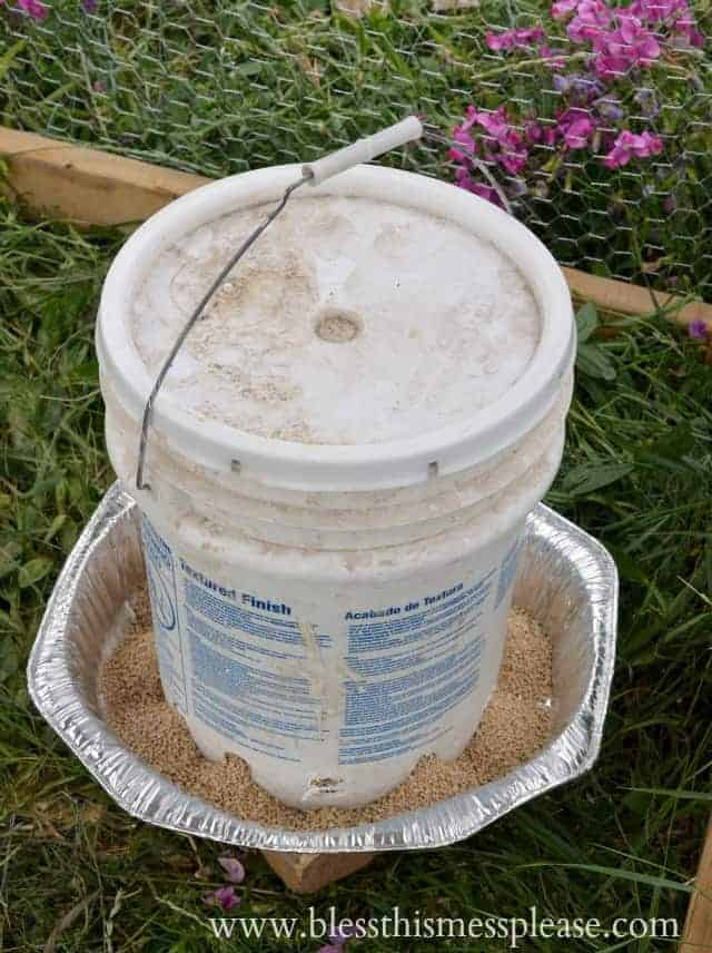 chicken feeder from 5 gallon bucket