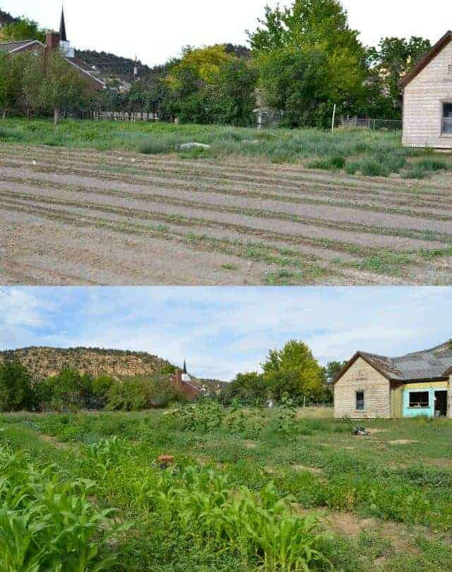 Garden comparison