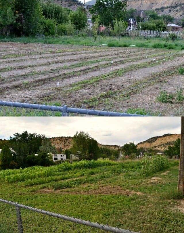 garden comparison 2