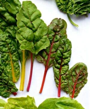 Leaves of fresh rainbow chard