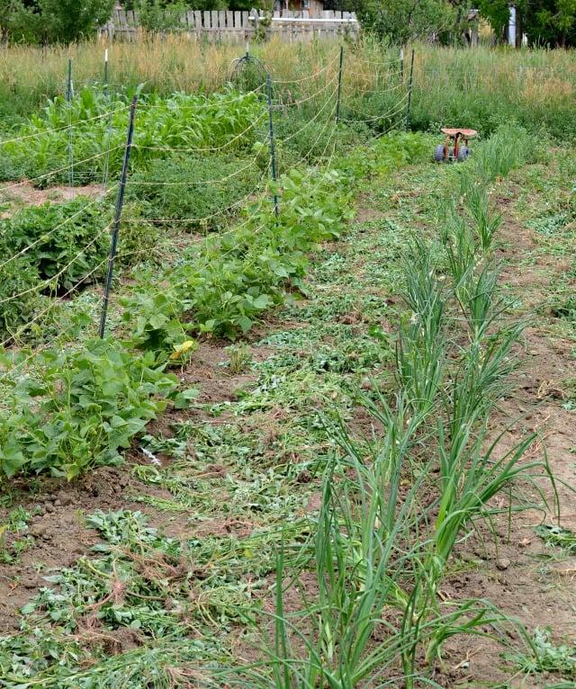 hobby farm garden 14