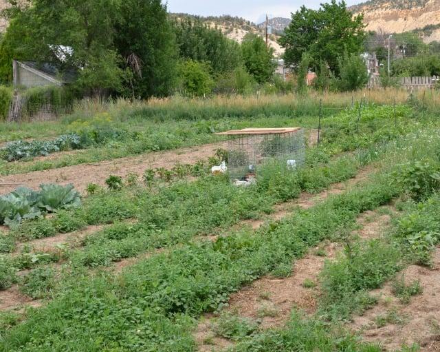 hobby farm garden