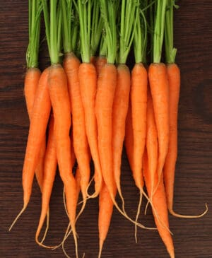 Everything you ever wanted to know about carrots!