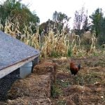Prepping the Chickens for Winter + a video