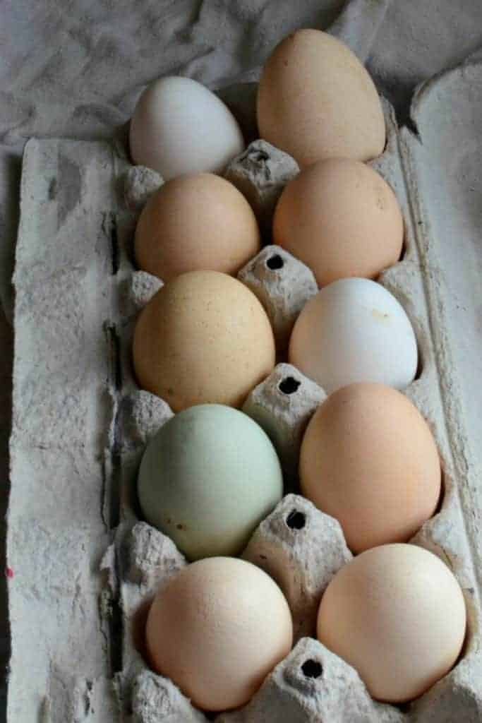 Top view of a dozen eggs of varying colors in a cardboard carton