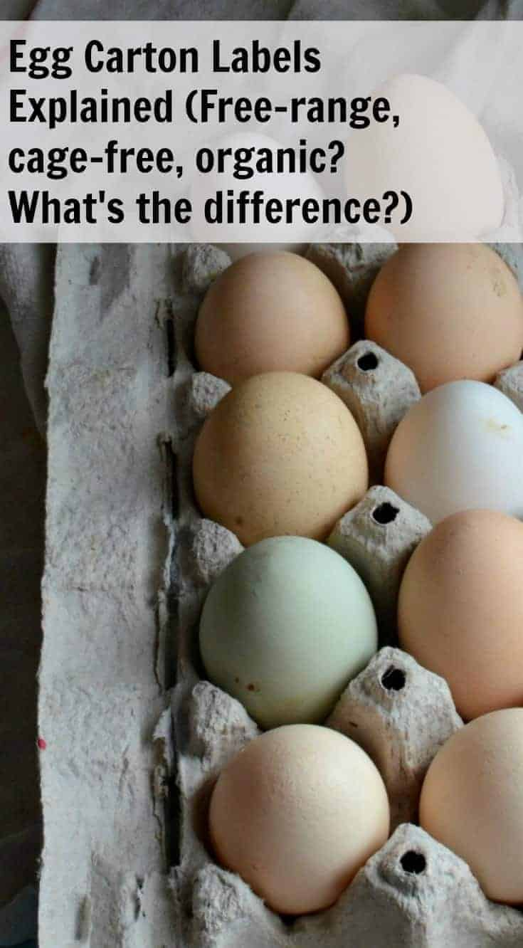 Ever wonder what all the different terms on the egg carton labels mean? Egg Carton Labels Explained will explain the terms, and help you know what store-bought eggs are the best to buy!