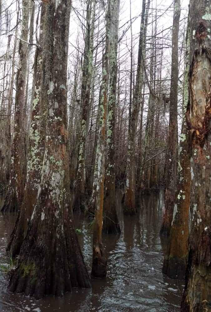 New Orleans Bayou