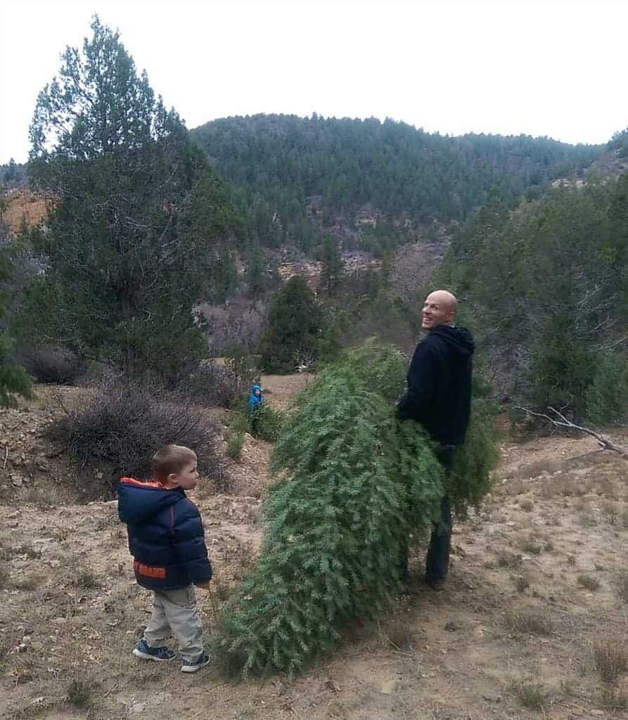 a man carrying a fresh christmas tree and kids playing nearby