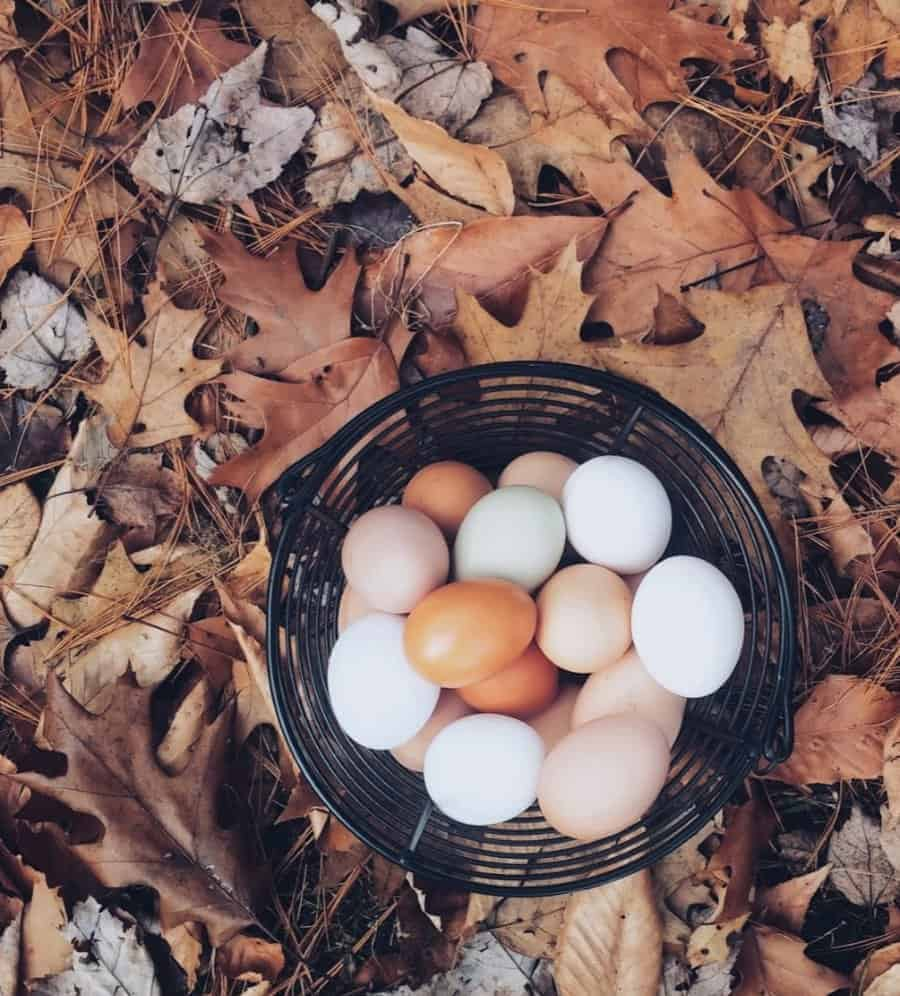 Ever wonder how long eggs are good for? Here's your answer plus lots of commonly asked egg information including how to freeze eggs, how to store eggs, and more.