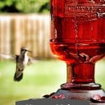 pin of humming bird food with text
